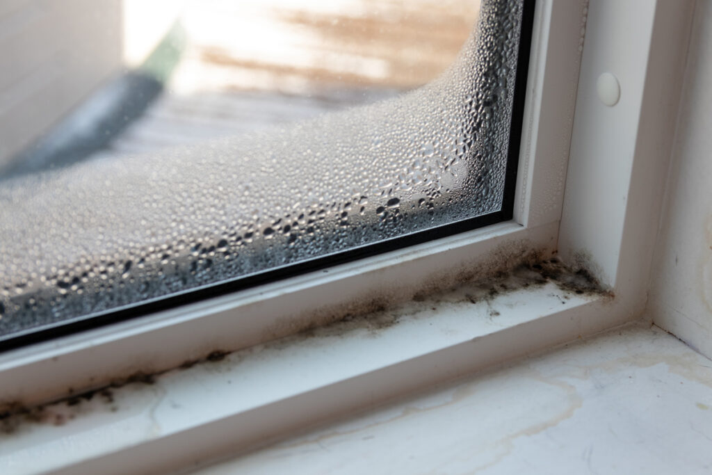 4 Signs that there could be mold in your home