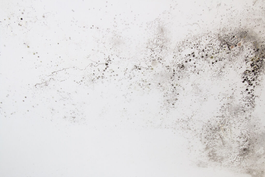 What Is Black Mold, and Is It Really that Dangerous?