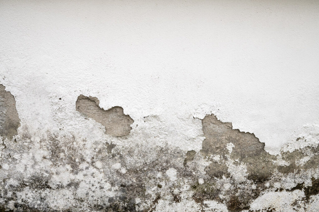 Everything You Need To Know About Mold Damage Remediation In Florida