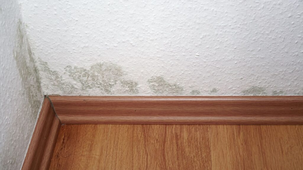How Did Mold Get There? 9 Places Mold Might Be Growing in Your Home