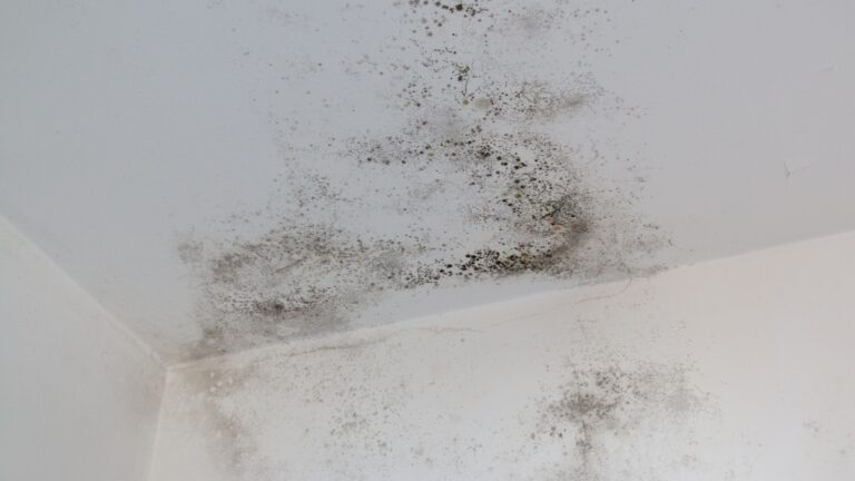 Protect Your Home and Health With Proper Mold Removal