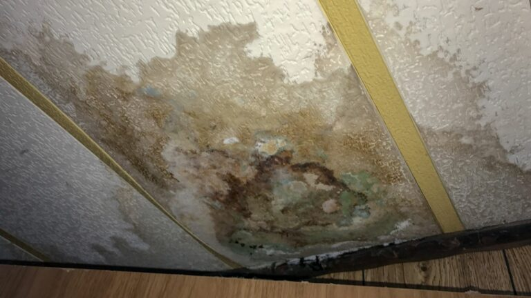 Top 4 Types Of Mold to Look Out For After Water Damage